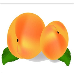 Two ripe peach fruit with leaves vector image