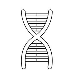 Dna molecule chromosome biology genetic line vector