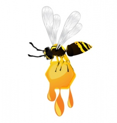 Wasp and honey vector
