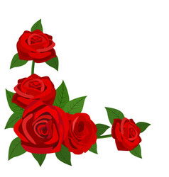 red roses with leaves isolated on a white vector image