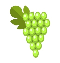 Green wet Isabella grapes bunch vector image