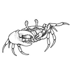 Hand drawn line art crab vector