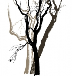 Old trees vector
