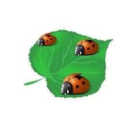 three ladybugs vector image vector image