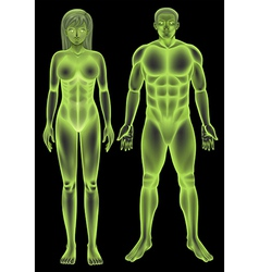 Male and female human body vector