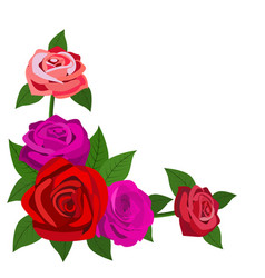 Red roses with leaves isolated on a white vector