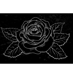 white rose outline gray spots black background vector image