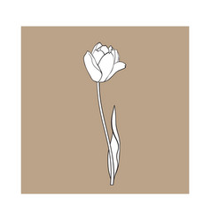 Hand drawn of side view black and white tulip vector
