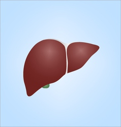 Realistic of human liver vector