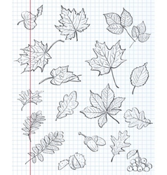 Set of autumn leaves chestnuts acorns and viburnum vector