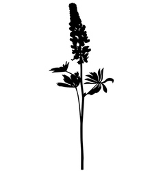 lupine vector image vector image