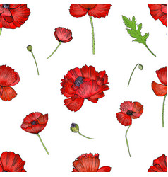 Seamless pattern with red poppies flower colorful vector