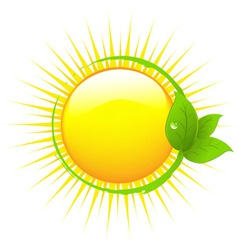 sun with leafs vector image vector image