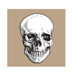 Hand drawn human skull anatomical model sketch vector