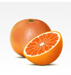 Grapefruit vector