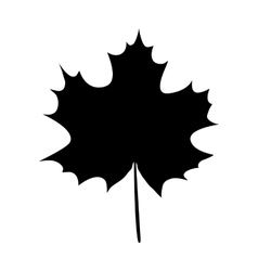 Maple leaf silhouette vector