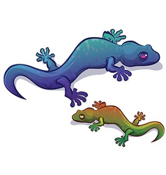Gecko Salamander Lizard vector image vector image
