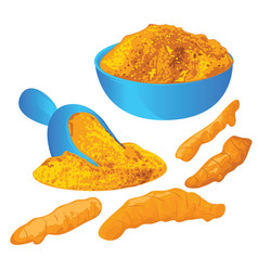 Turmeric roots and powder in a bowl vector