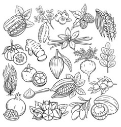 Superfood icons vector