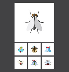 Flat icon fly set of buzz hum tiny and other vector