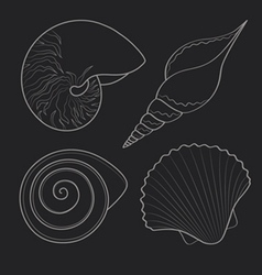 Graphic sea shells vector image vector image