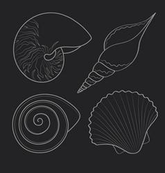 Graphic sea shells vector
