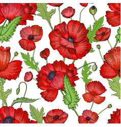 Seamless pattern with poppies colorful hand drawn vector