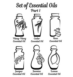 Set of stylized bottles with essential oils vector
