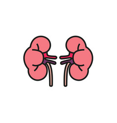 simple icon of human kidneys on white background vector image