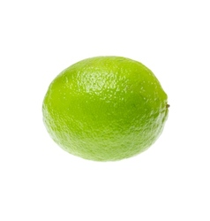Fresh ripe lime isolated on white background vector