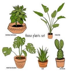 color houseplants set vector image