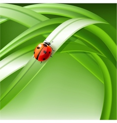 ladybug on grass vector image