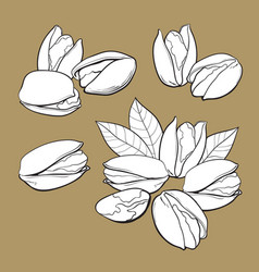 Set of hand drawn pistachio nuts single and vector