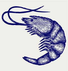 Boiled shrimp vector image