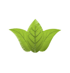 Drawing green leaves flora vector