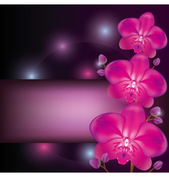 Purple orchid background greeting or invitation vector image