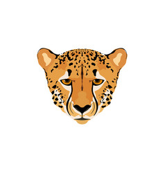 a cheetah head vector image vector image