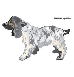 russian spaniel vector image vector image