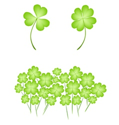Four leaf clovers on white background vector