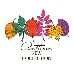 Colorful autumn leaves concept vector