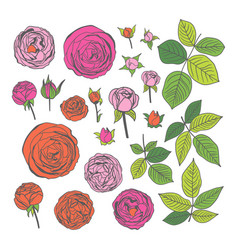 graphic colored roses vector image vector image