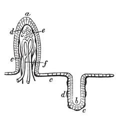 Mucous membrane vintage vector