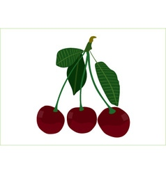 Sour cherry vector