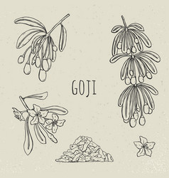 goji on a branch hand drawn set collection vector image vector image