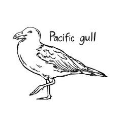 pacific gull vector image vector image