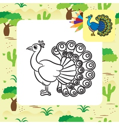 Peacock coloring page vector