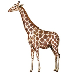 A giraffe vector