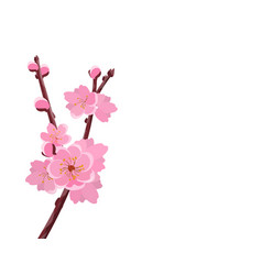 branch with delicate flowers and cherry buds vector image vector image