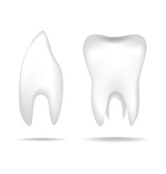 Teeth object vector image