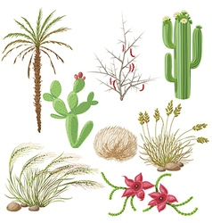 Desert plants vector
